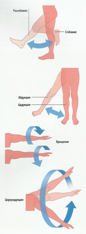 сгибание ног схема