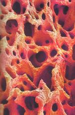 костная ткань фото