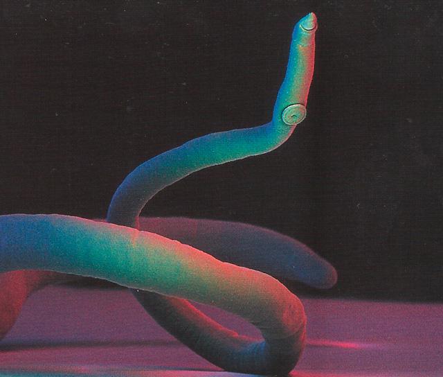 паразит фото