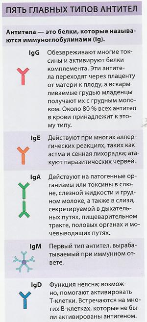 Таблица антител