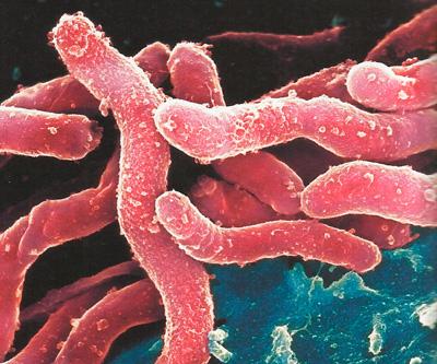 Бактерия фото
