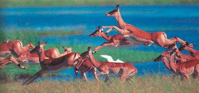 Антилопы фото