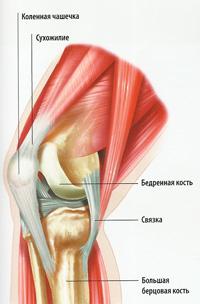коленный сустав схема