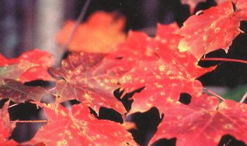 листья фото