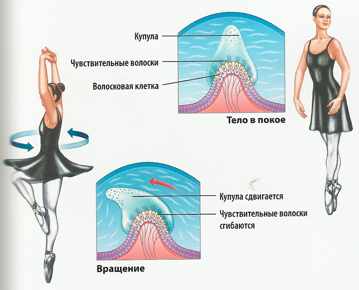 схема положение тела