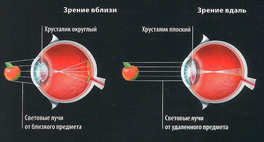 зрение схема